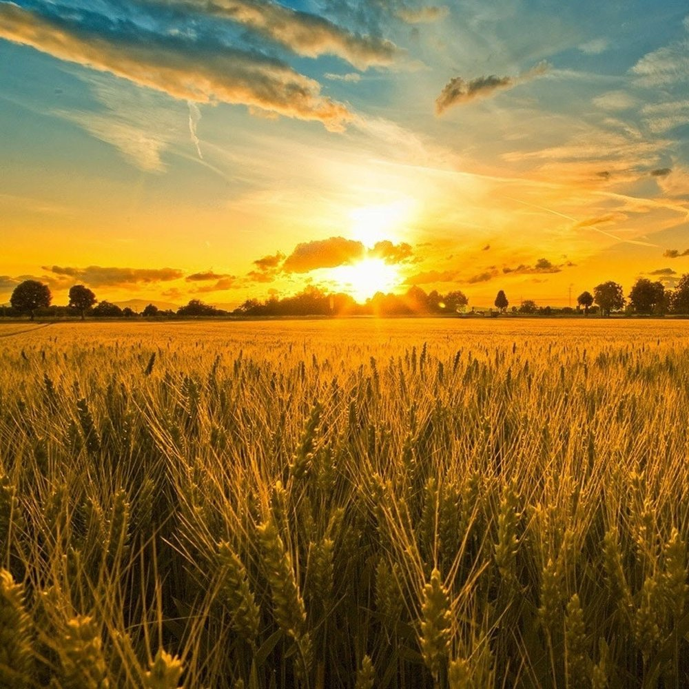 For the fields are ripe unto harvest and the night fast approaches.