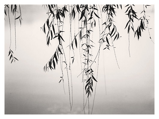 Weeping Willow (China)