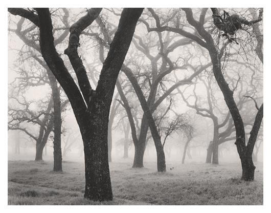 Oak Nest