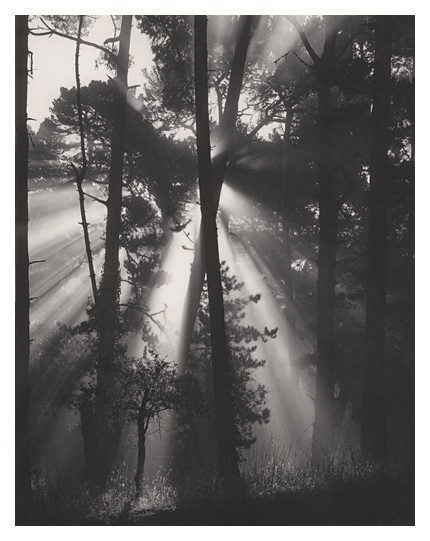 Skyline Forest
