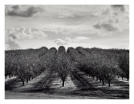 Rodden Orchard