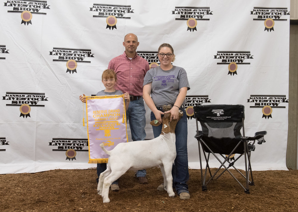2016 Kansas Junior Livestock Show Reserve Grand Champion Raised by Falkenstien Family Show Goats (X-Factor x ProStock B221)