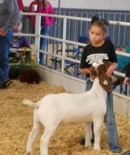 2017 KJLS 1st in class; Kansas State Fair 2nd in class