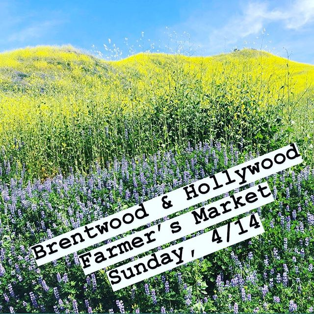 We will be at the Farmer's Market in Brentwood and Hollywood tomorrow. 🍋🥑🍎🍉🥬 . . . #womenownedbusiness #hollywood #hollywoodfarmersmarket #brentwood #brentwoodfarmersmarket #muddleandwilde #cocktails #syrups #nonalcoholic #drinks #mixology #calimade #cocktailset #hostessgift #whiskey #rye #bourbon #tequila #mezcal #citrus #cbd #mocktail #sodastream #mixyourown #homebar #bar