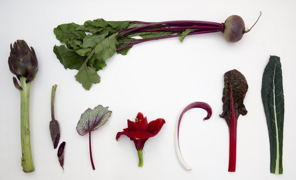 10 inverno2 ingredienti.jpg