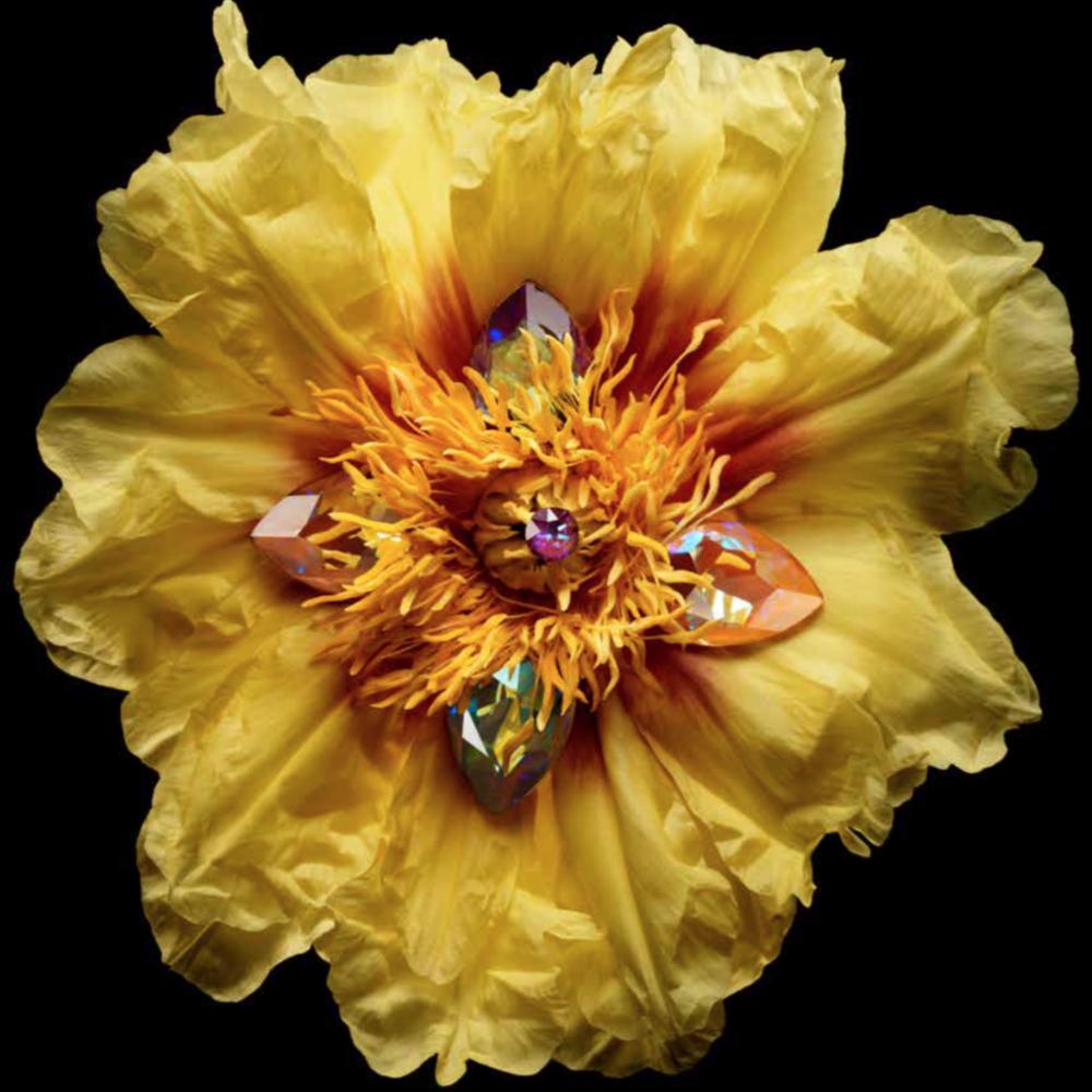 book of dreams - Abbiamo lavorato al flower design del primo e anche del secondo volume di Book of Dreams per Swarovki, una produzione Cabana Magazine