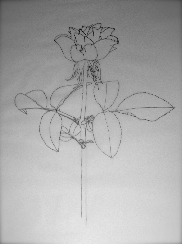 Part 1: Line drawing of a rose.
