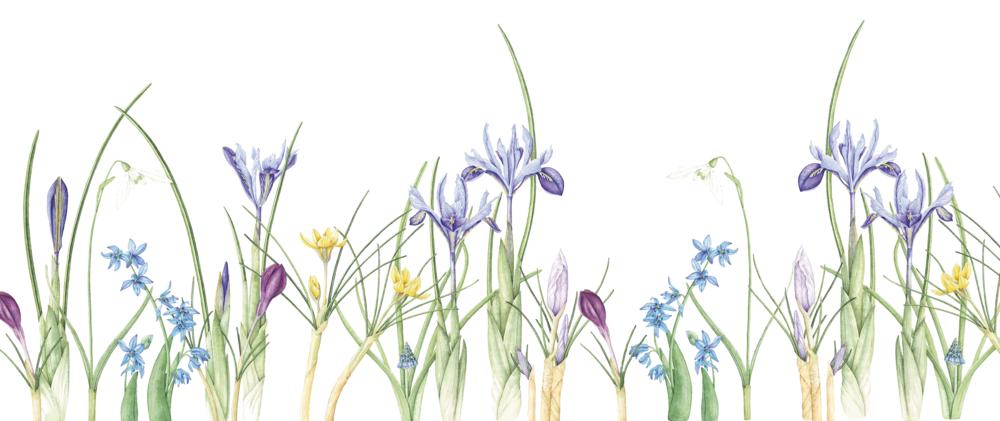Helen Cousins Spring Bulbs.jpeg