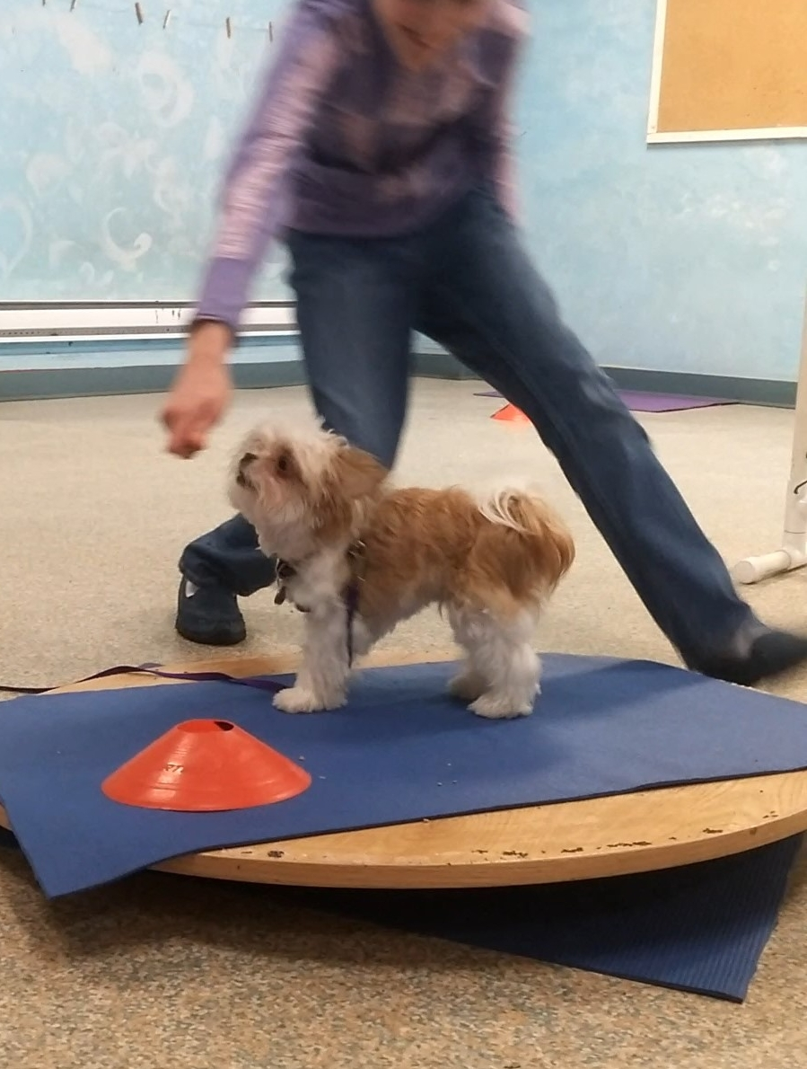 Kona using the wobble board.
