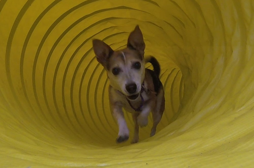 Dora in the tunnel.