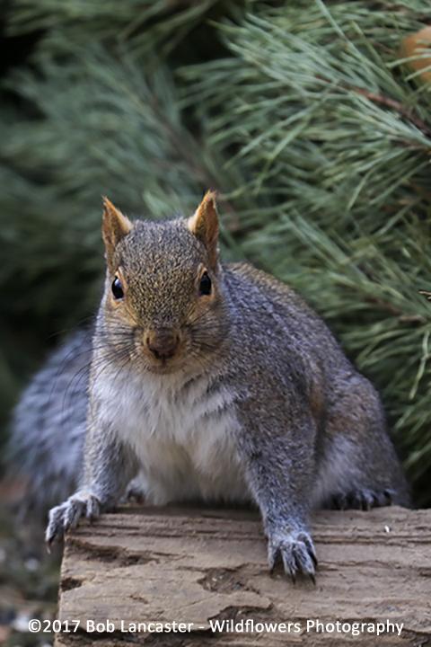 squirrel_posing_020517_MG_1193.jpg