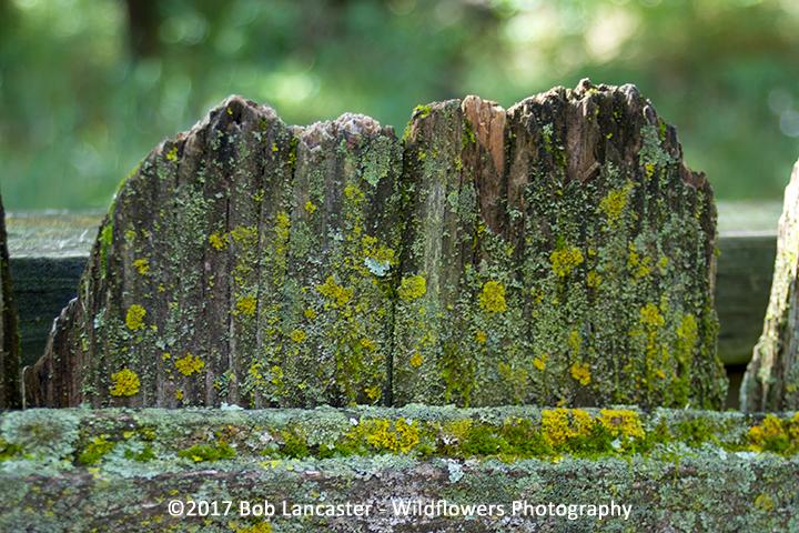 lichens_ 082017_MG2361.jpg