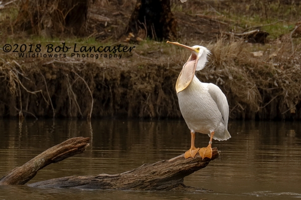 IARiver Pelican#5_MG_1982.jpg