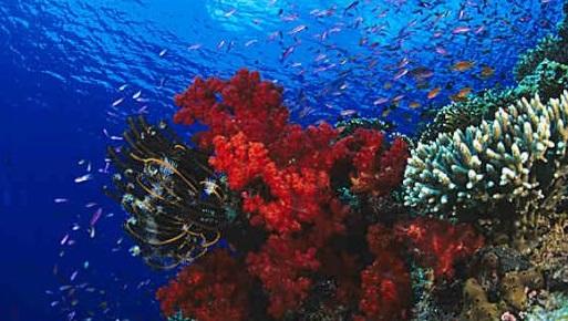 coral Lagoon.JPG