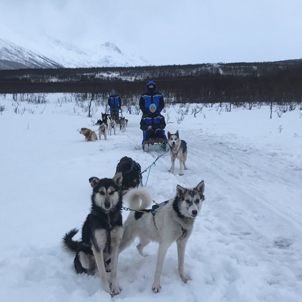 Coming Soon - Dog Sledding in Tromso, Norway