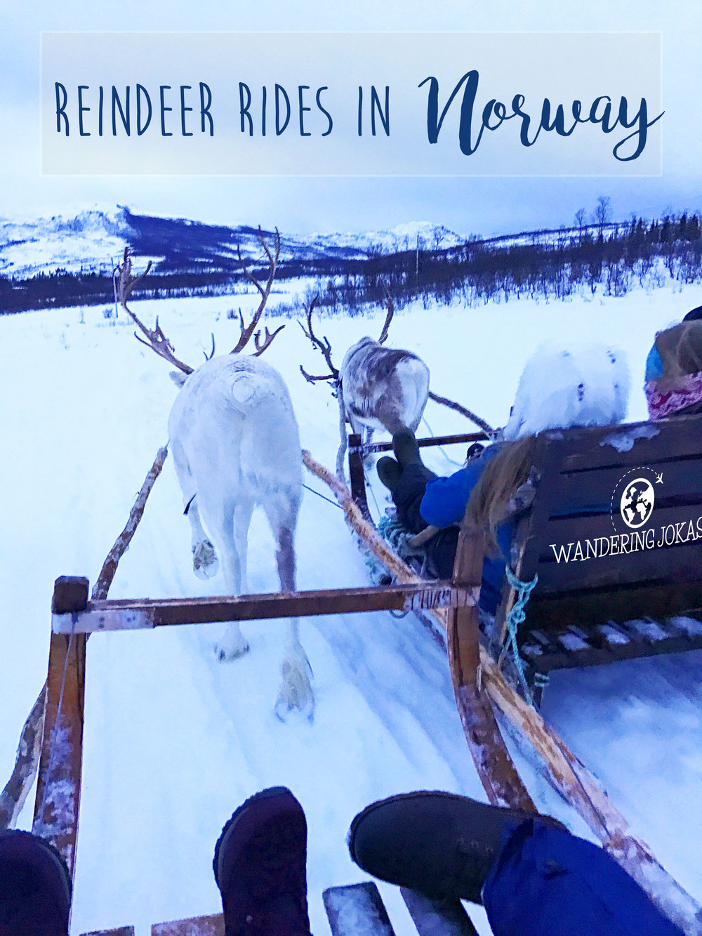 Reindeer Rides in Norway - Wandering Jokas Travel Blog