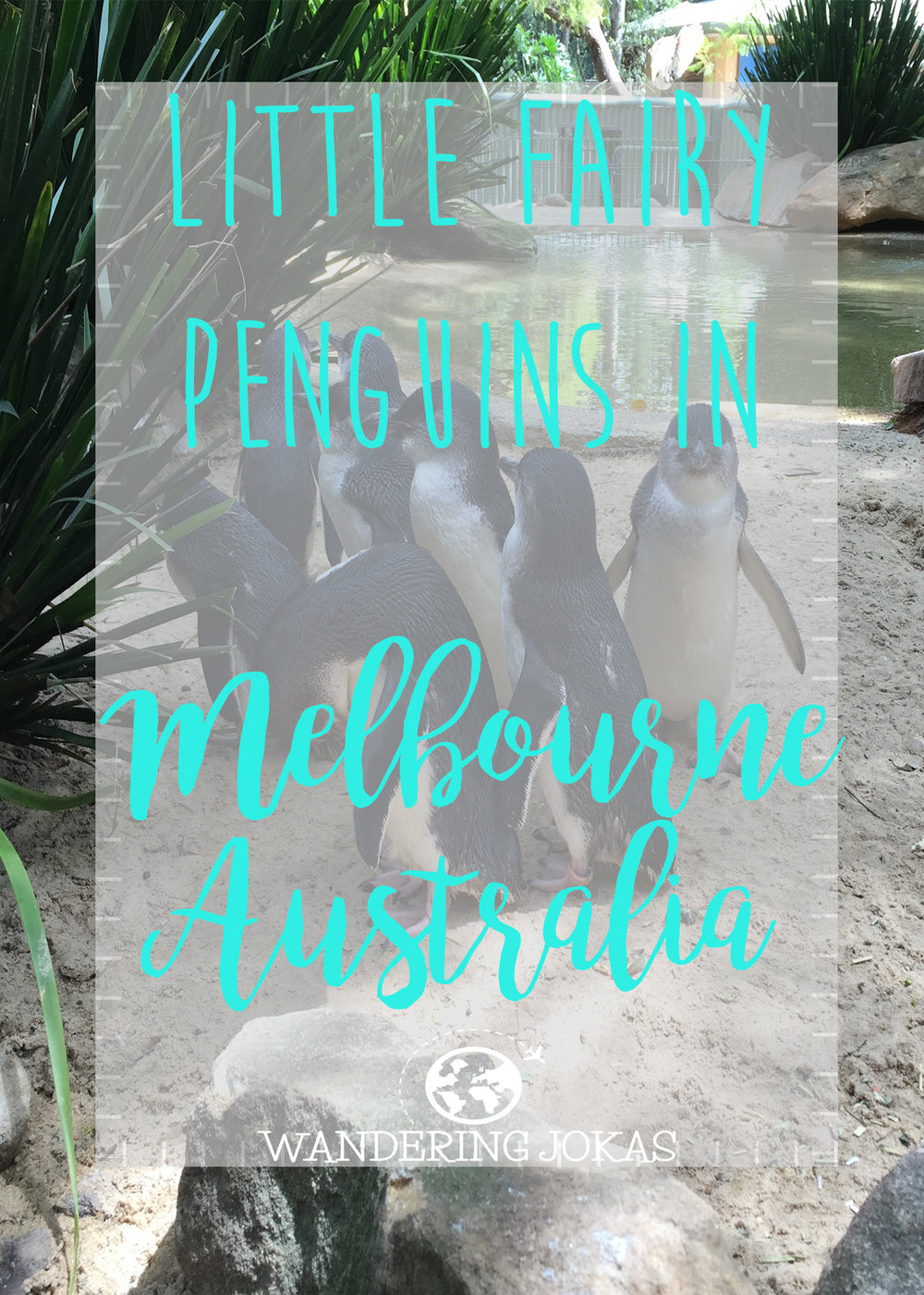 Little Fairy Penguins in Melbourne, Australia - Wandering Jokas Travel Blog