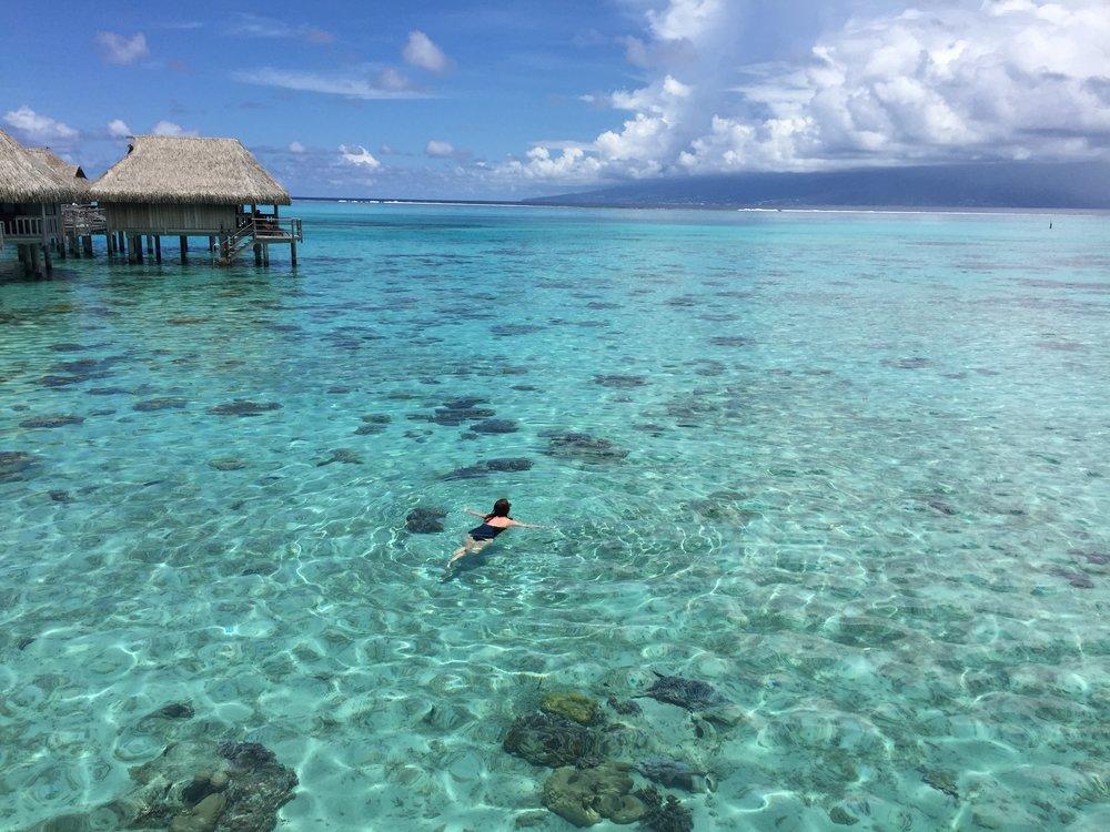 Swim Moorea - Wandering Jokas Travel Blog