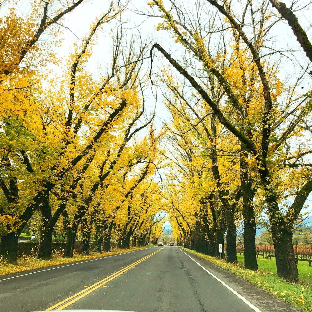 Beautiful Fall in Napa