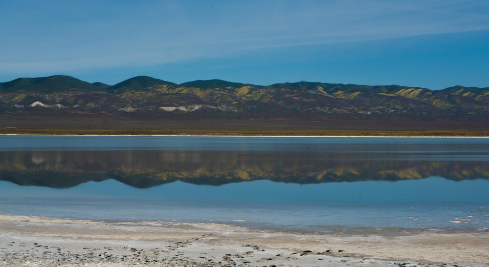 Soda Lake Carrizo Plain Super Bloom - Wandering Jokas Travel Blog