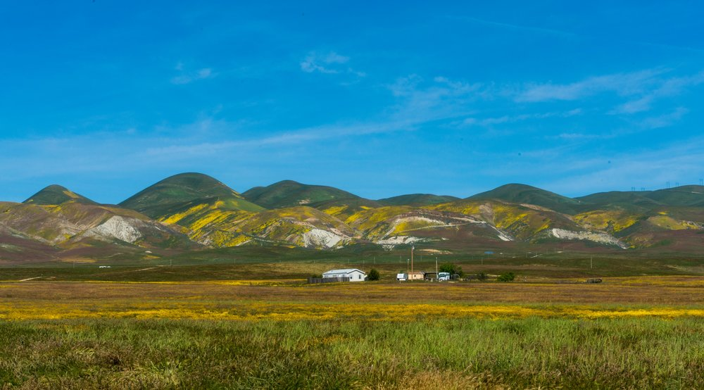 Carrizo Plain Super Bloom - Wandering Jokas Travel Blog