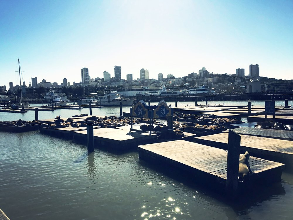 Sea Lions at Pier 39 - Things to do in San Francisco