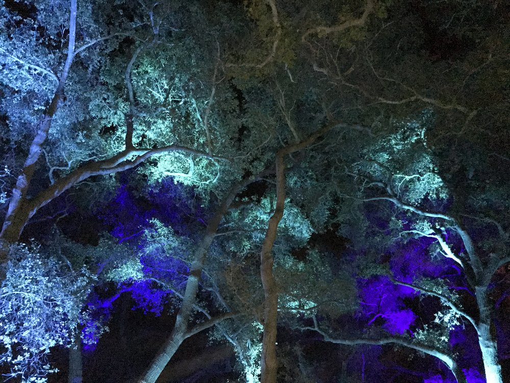enchanted trees decanso garden