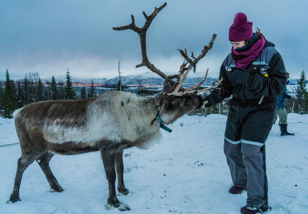 Feeding Reindeer in Norway - favorite things to do in Norway