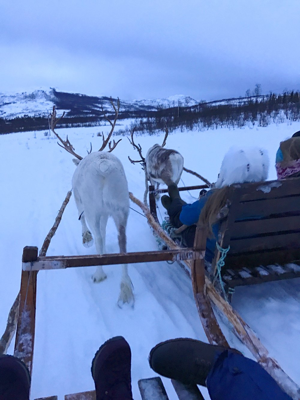 Reindeer Rides in Tromsø, Norway