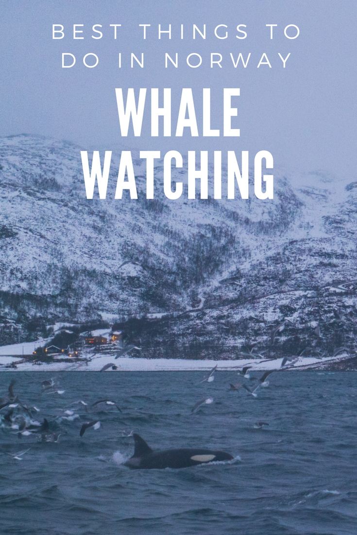 Whale Watching in Tromsø, Things to do in Norway