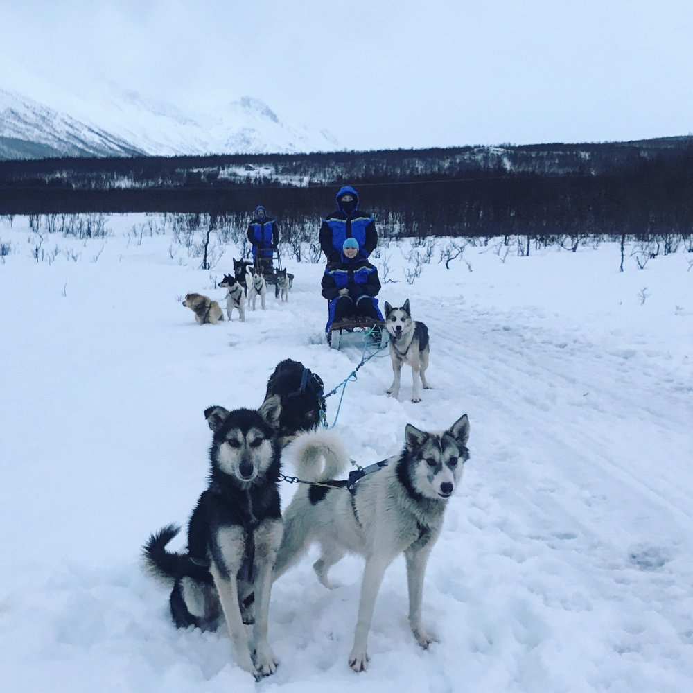 Dog sledding in the Lyngen Alps in Norway