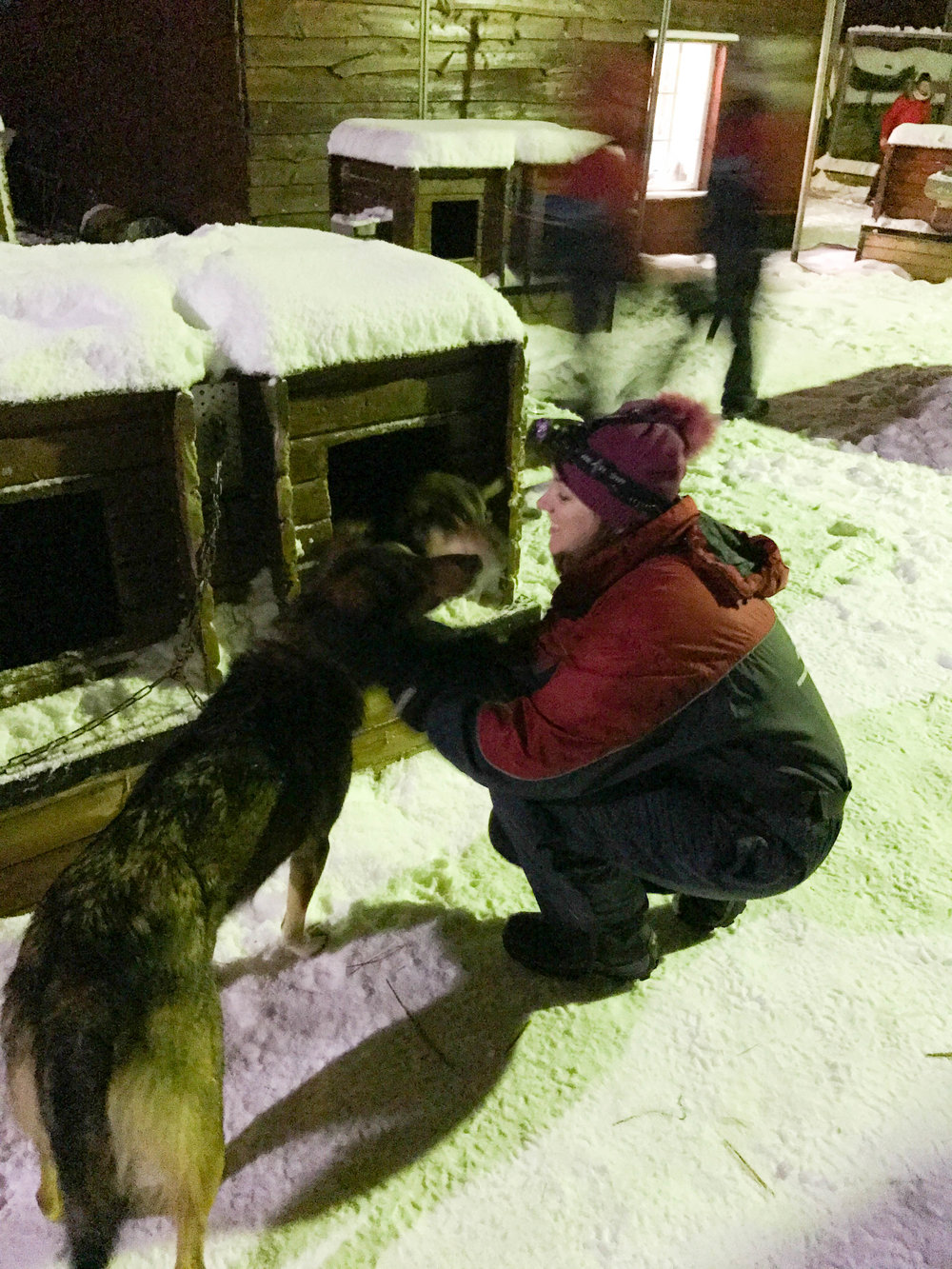 Norway Adventures- dog sledding dogs
