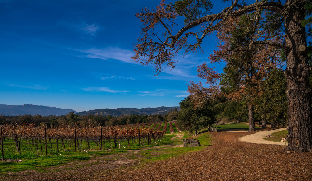 Best Wineries in Sonoma - Gundlach Bunschu Winery