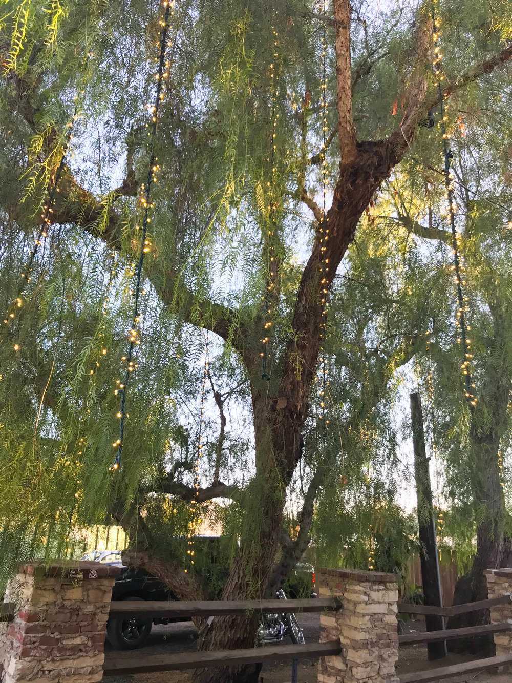 Malibu Wine and Beer Garden - Willow tree lights