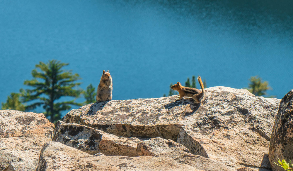 Tahoe Chipmunks Cascade Lake Hike