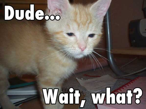 I promise, my only Lolcat-related image ever.