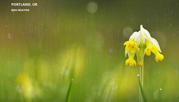 Backlog - Memorial Rain Header