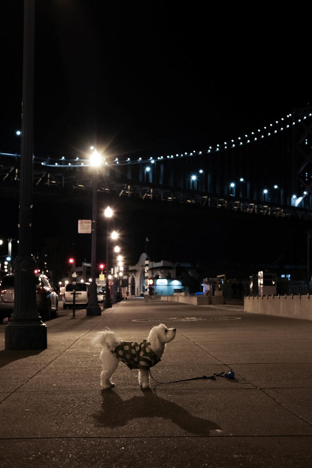 "<p style=""font-family:brandon-grotesque;font-weight:500; font-size:11px; text-center:left; color:light grey;letter-spacing: 1px"">MAY 10, 2017 • LATE NIGHT PONDERING • 📍 San Francisco, CA</p>"