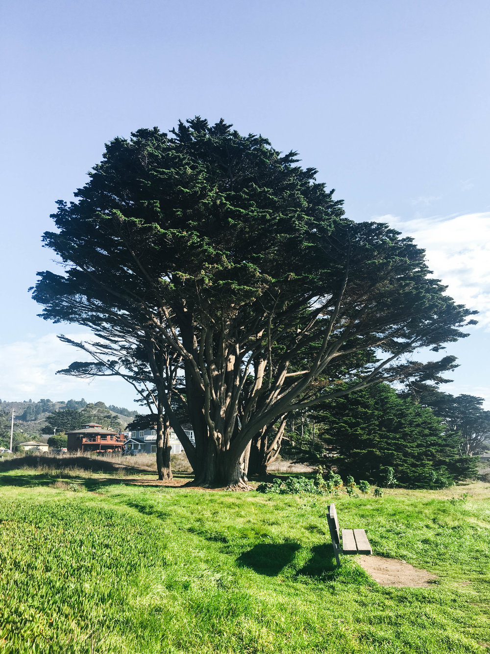 "<p style=""font-family:brandon-grotesque;font-weight:500; font-size:11px; text-center:left; color:light grey;letter-spacing: 1px"">OCTOBER 22, 2017 • PICNIC • 📍 Santa Cruz, CA</p>"