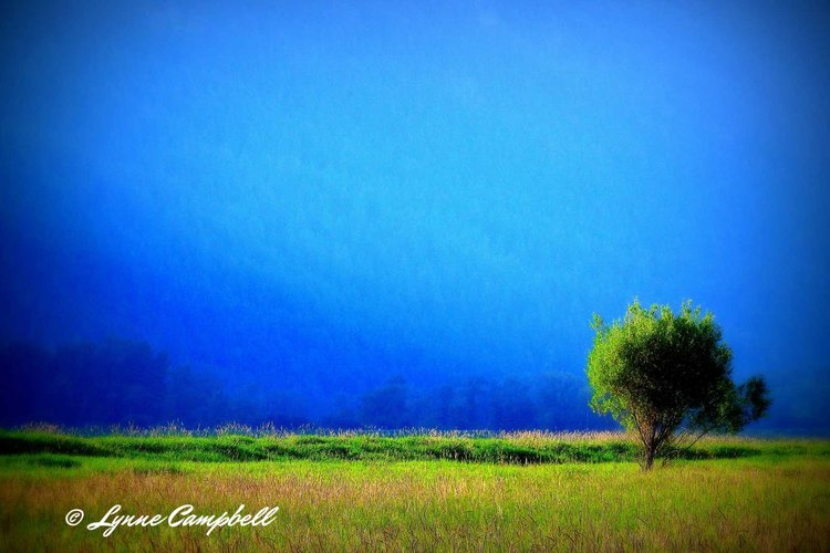 Landscapes- Summer