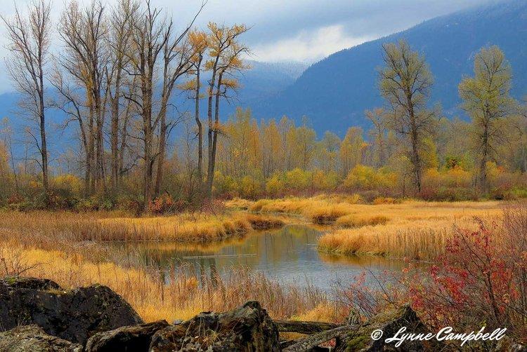 Landscapes - Fall
