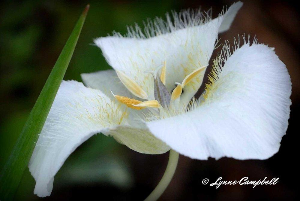 Flowers- Wild
