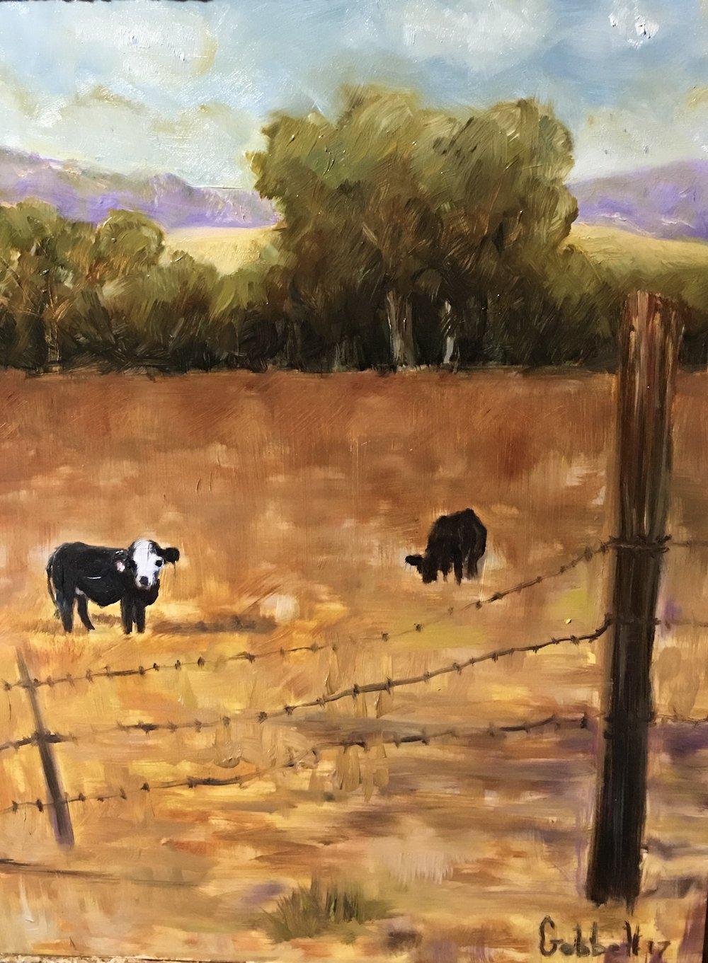 Calcium Cows