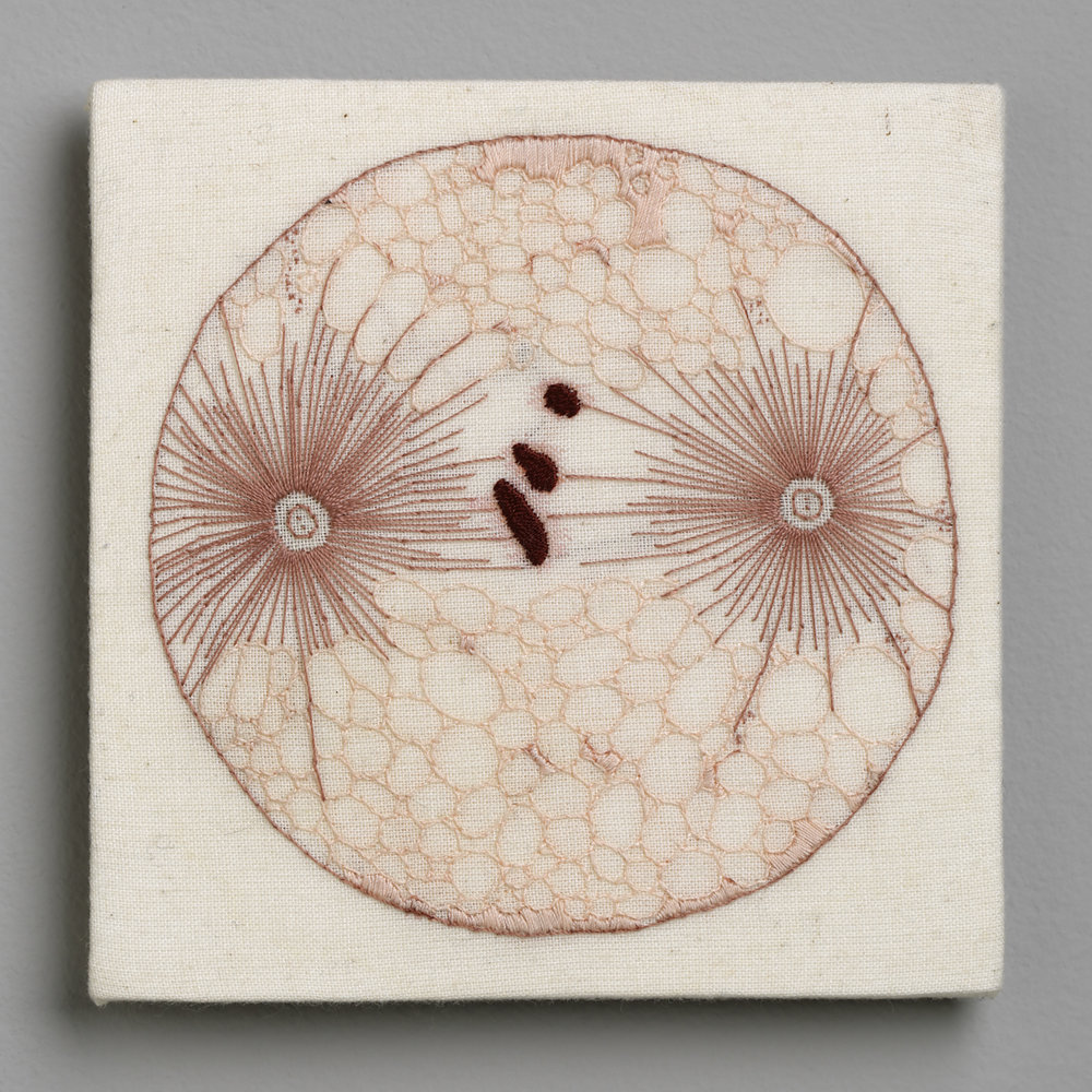No.8 Cell Division