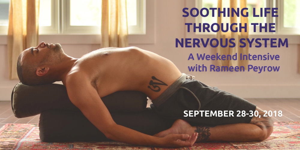 rameen-nervous-system-banner-no-button.jpg