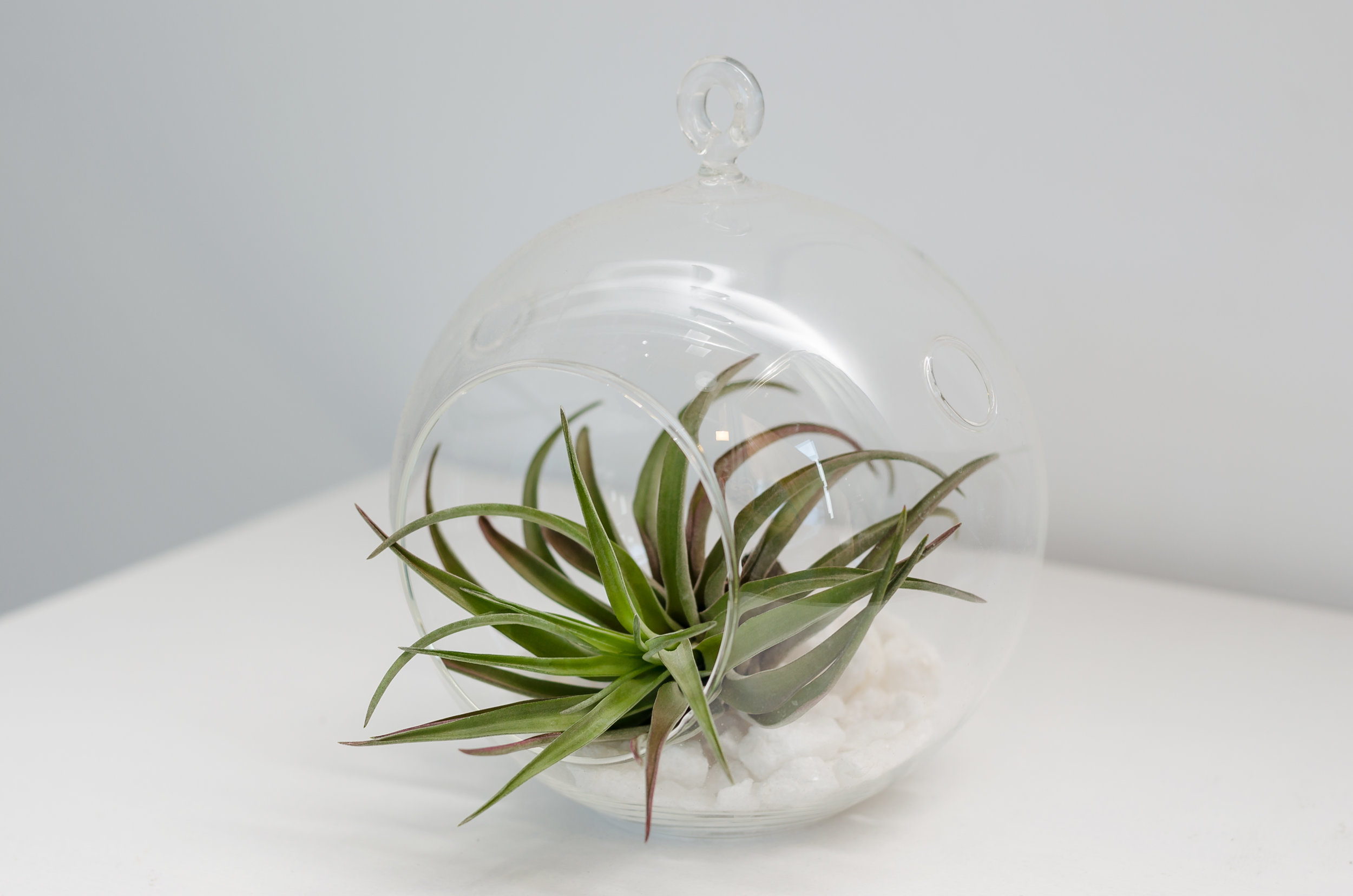 Air Plant Terrarium Hanging Air Plant Terrarium La Lovely Vintage