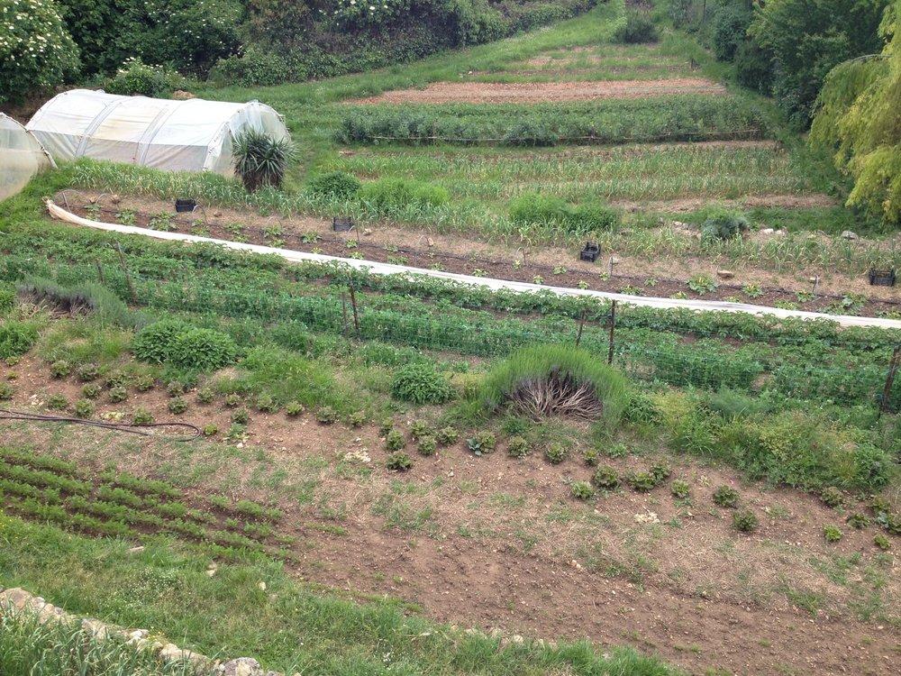 Terrace garden at Spannocchia