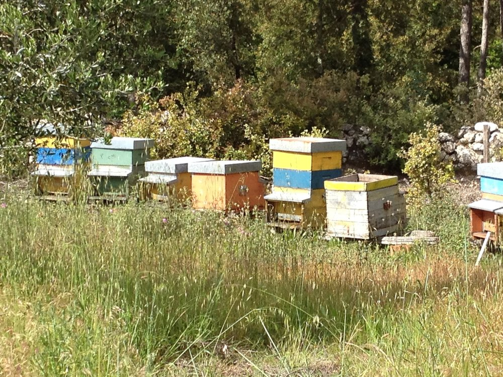 Bee hives at Spannocchia