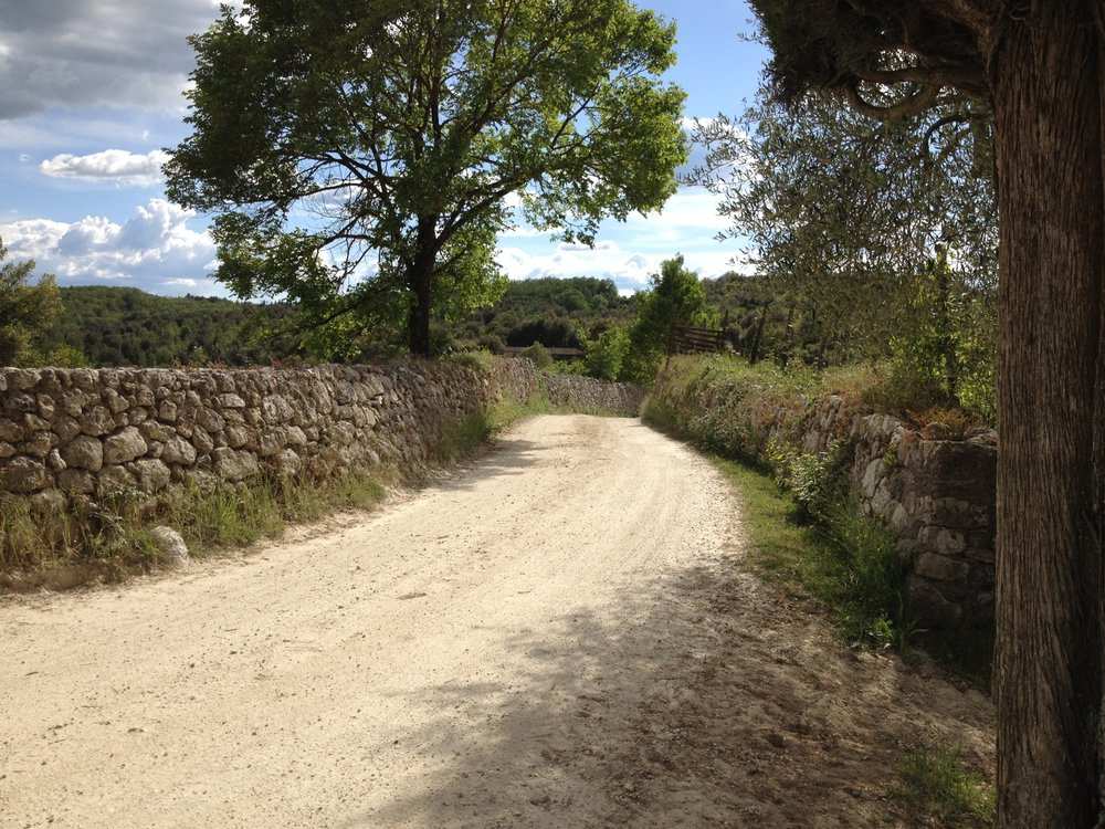 The road to the manor at Spannocchia