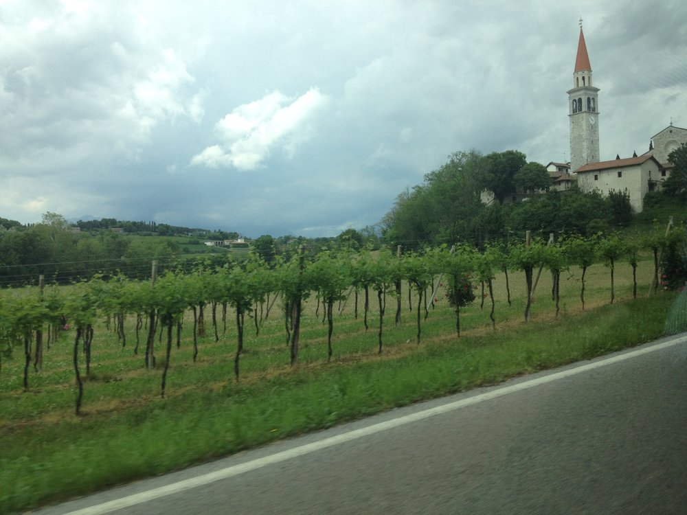 Udine vineyards